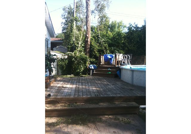 tree and deck