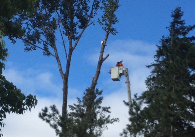 Allmac Tree Services use a 65' bucket truck
